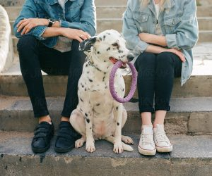 two people sit on steps behind a spotted Dalmatian