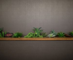 row of succulents and other plants behind wooden counter